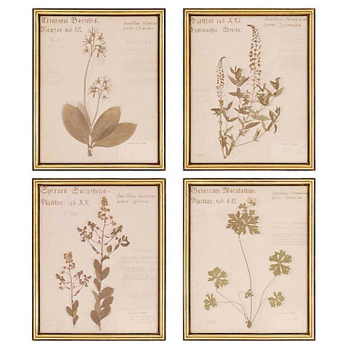 Framed botanical prints.