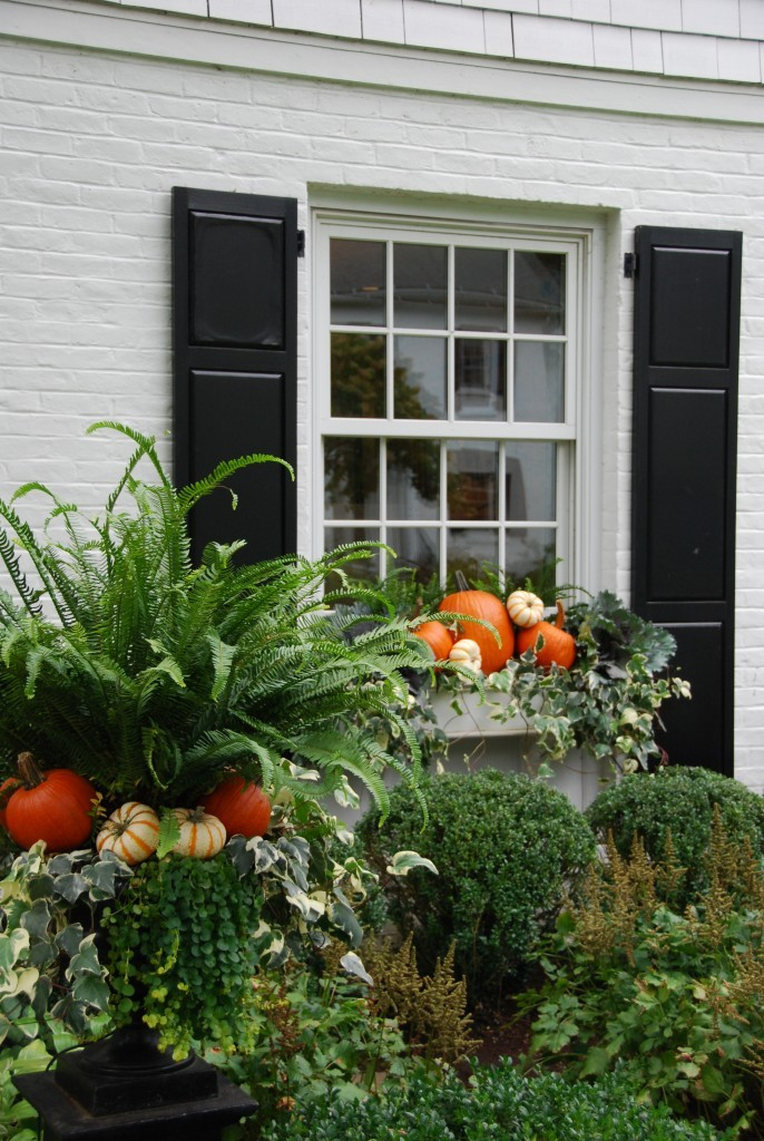 Fall window boxes with pumpkins, ivy, and ferns by Pretty Pink Tulips. Pretty Pumpkin Decor and Recipes [in case you're ready to FALL in Love With Autumn].