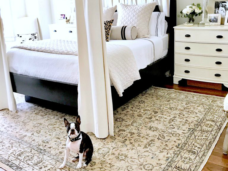 Traditional style black and white bedroom with Boston Terrier on Hello Lovely Studio
