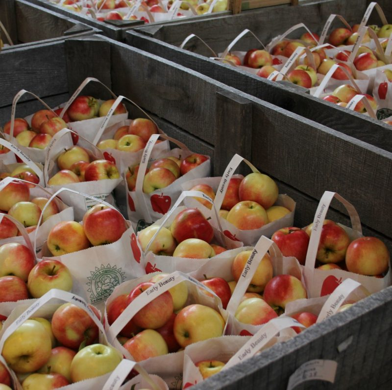 Bins of beautiful Early Beauty fall apples by Hello Lovely Studio