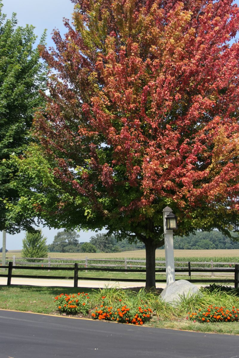 Gorgeous red leaves on fall tree on Hello Lovely Studio