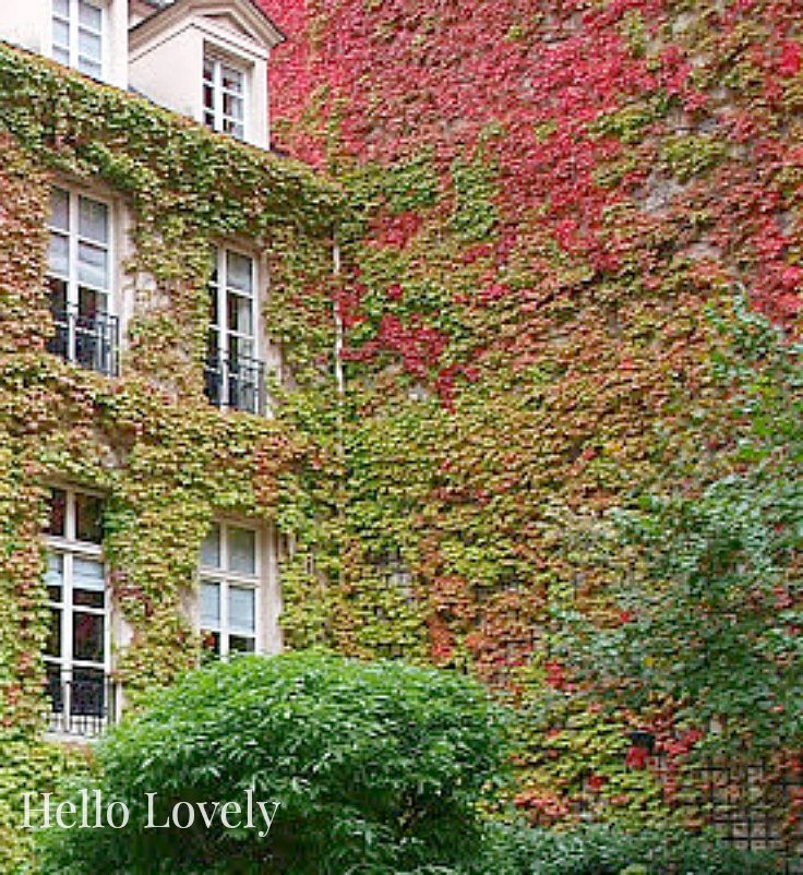 Creeping red vine and ivy on Paris hotel by Hello Lovely Studio. #climbingvines #fallbeauty