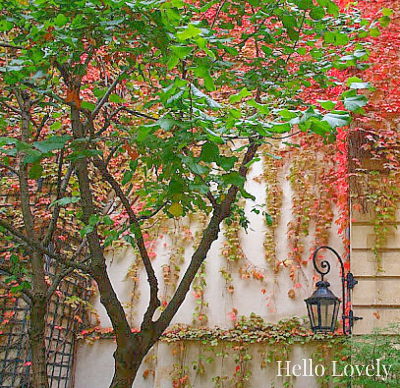 Climbing red vines on Pavillon de la Reine in Paris in fall by Hello Lovely Studio