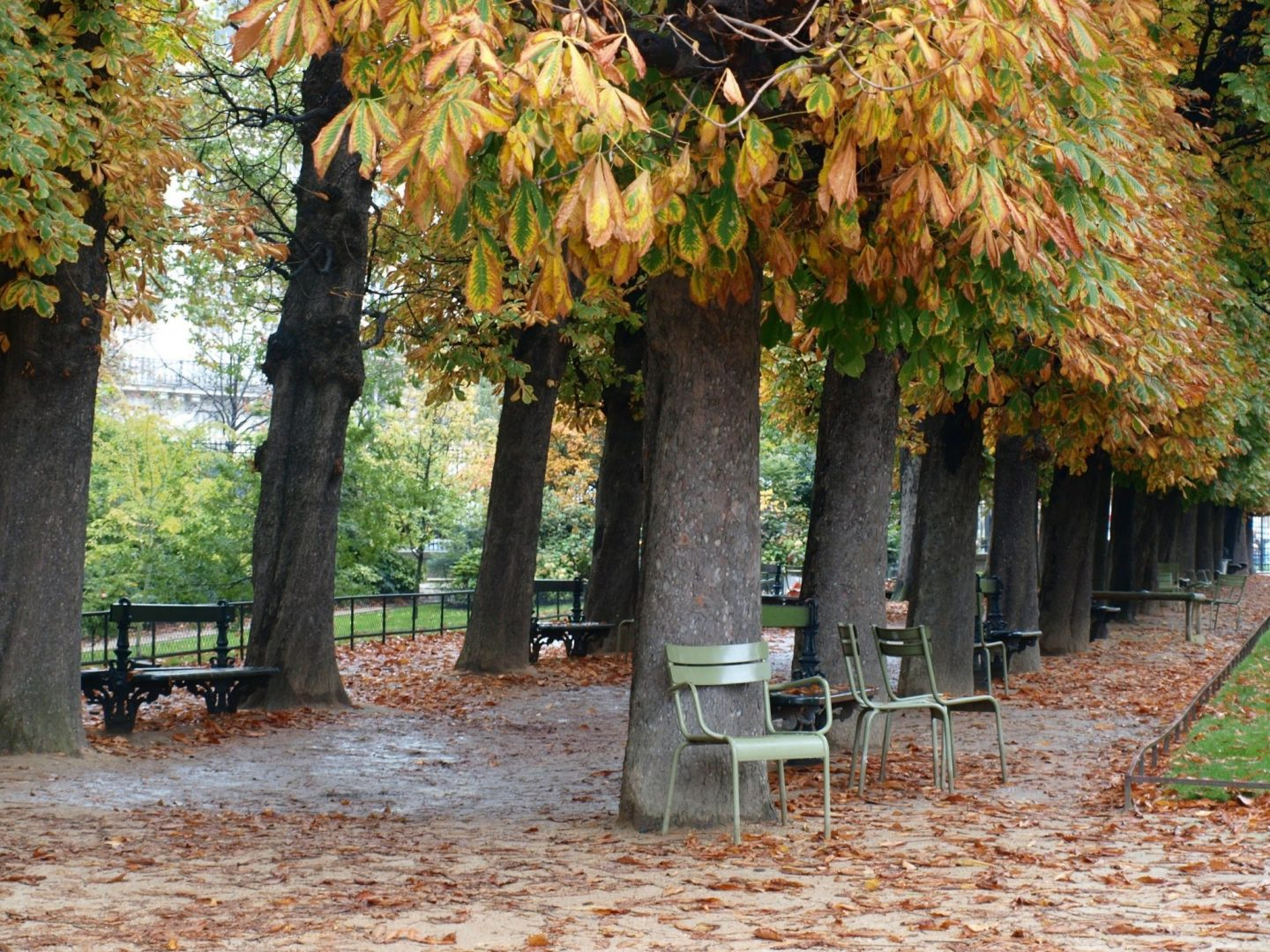 Jardin de Tuileries in Paris in the fall with golden leaves and green chairs