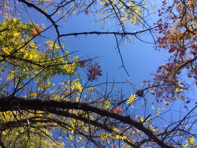 Periwinkle blue sky and yellow leaves in Arizona - Hello Lovely Studio.