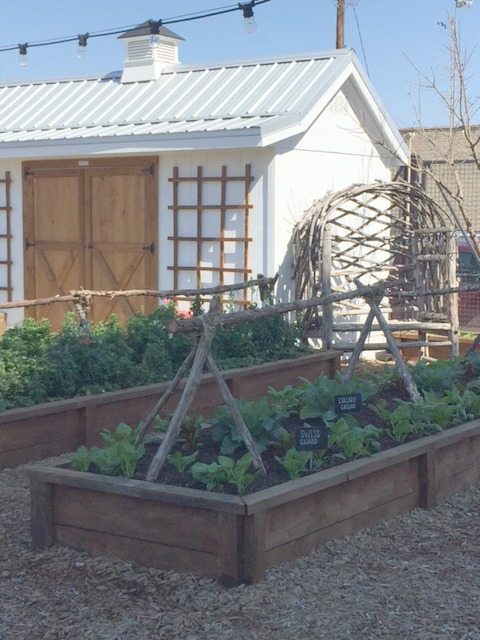 Garden shed with metal roof and cupola and raised garden beds at Magnolia Silos in Waco, Texas. #magnolia #garden #silos #waco