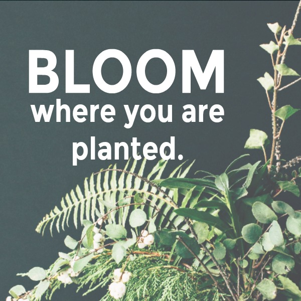 Inspiring quote of encouragement. Bloom where you are planted. Hello Lovely Studio. #bloom #hellolovelystudio #quote #encouragement