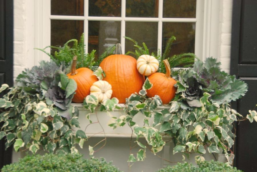 Fall window box with pumpkins. #windowbox #fall #pumpkins