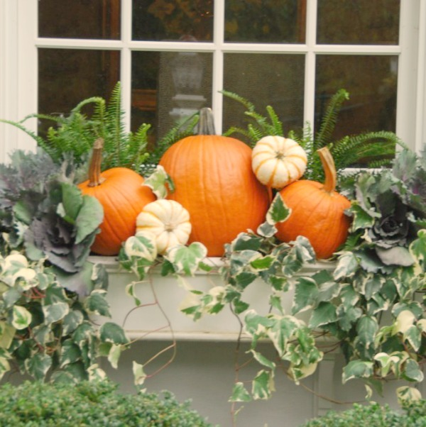 Fall window box inspiration with pumpkins and ivy. Elizabeth of Pretty Pink Tulips. #autumndecor #windowbox