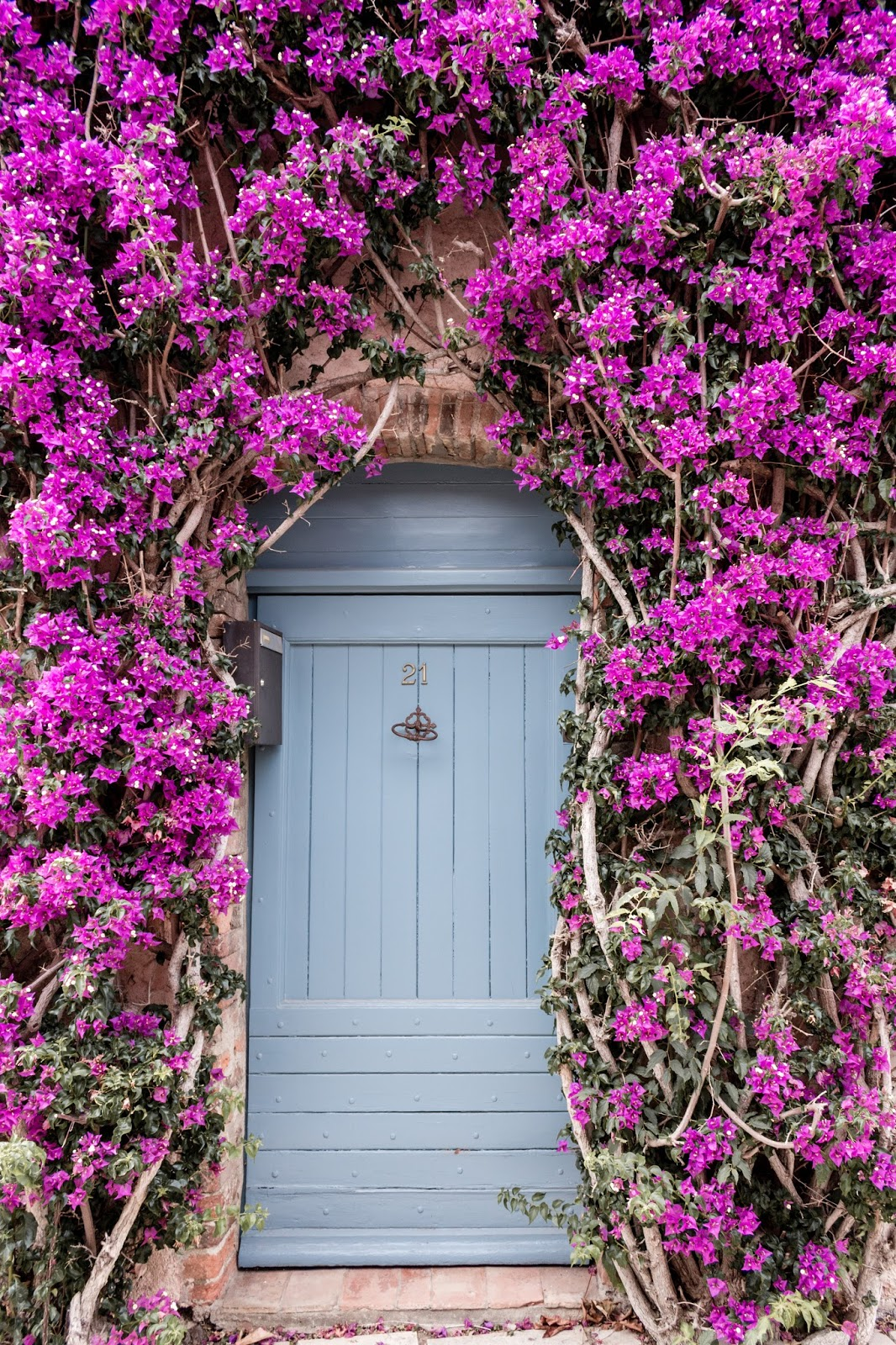 French country front door with blue and bright pink climbing vines and flowers.