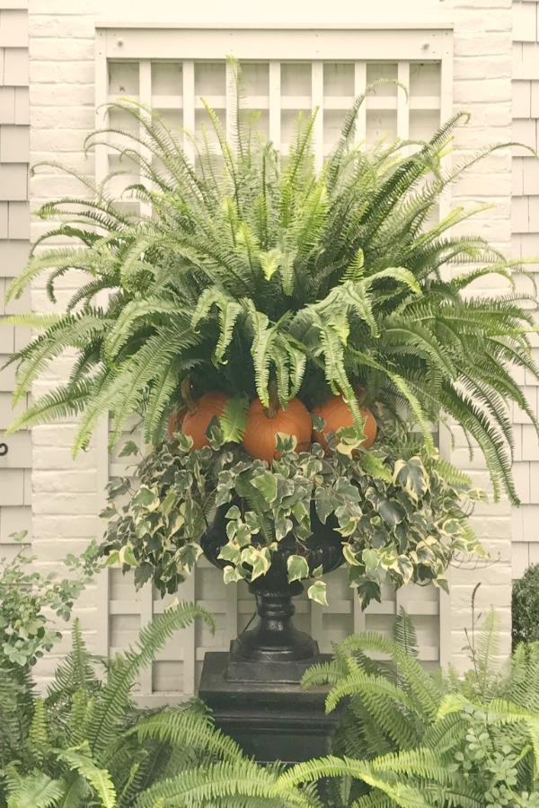 Fall planter with fern, pumpkins, and ivy. Elizabeth of Pretty Pink Tulips. #fallplanter #falldecor #ferns
