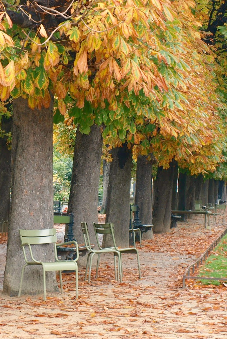 Paris park in fall. Fall leaves and inspiration for savoring the season. Visit 9 Lovely Ways to Savor Autumn Beauty for more beauty from the avenues of Paris to the American prairie. #hellolovelystudio #fallinspiration #autumn #ideas
