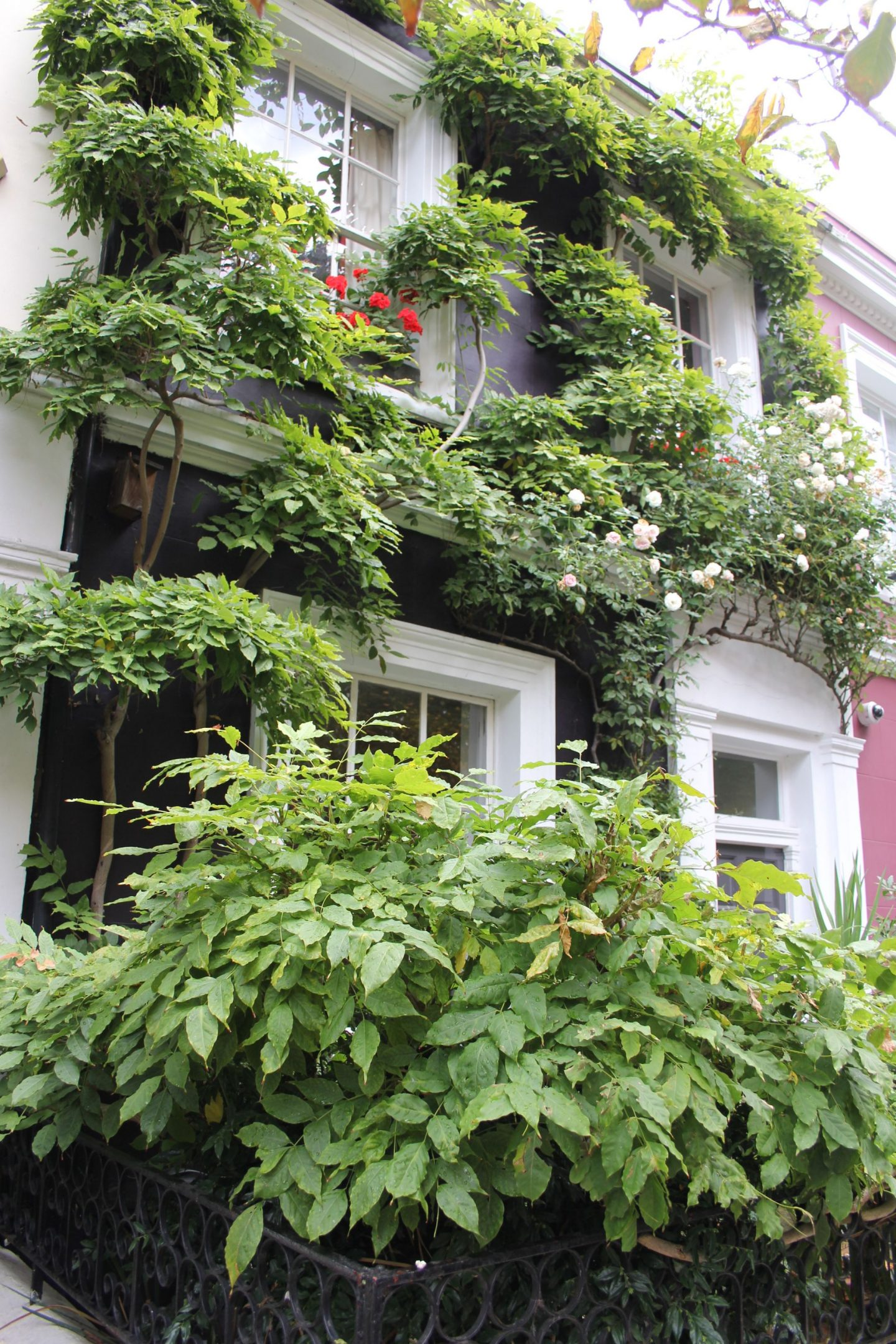 Stunning and romantic vine covered home in Notting Hill. Hello Lovely Studio. Come tour these gorgeous front doors in Notting Hill and Holland Park...certainly lovely indeed. Curb appeal and Paint Color Inspiration. Lovely London Doors & Paint Color Ideas!