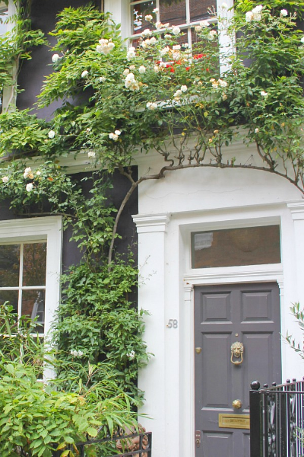 Charcoal grey front door and climbing vines on a Notting Hill home. Hello Lovely Studio. Come tour these gorgeous front doors in Notting Hill and Holland Park...certainly lovely indeed. Curb appeal and Paint Color Inspiration. Lovely London Doors & Paint Color Ideas!