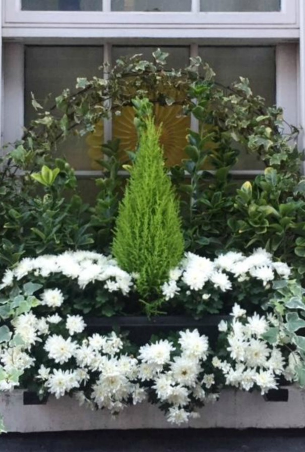 Beautifully simple and elegant garden window box in London with cypress, ivy, and mums. Hello Lovely Studio.