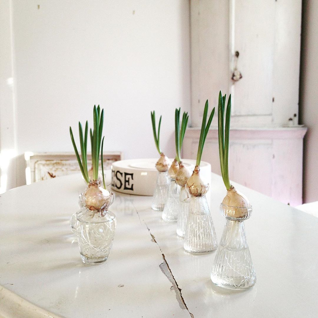Forced bulbs in a serene all white French Nordic kitchen - My Petite Maison.