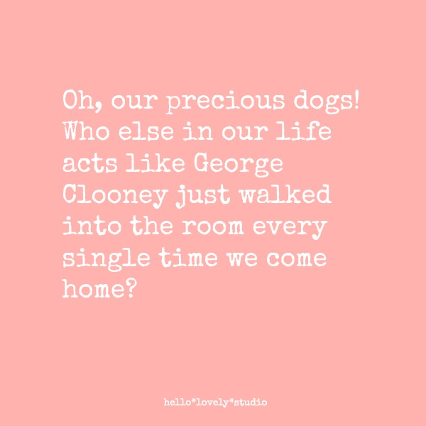 Funny dog quote by Michele: Oh, our precious dogs! Who else in our live acts like George Clooney just walked into the room every single time we come home? #hellolovelystudio #funnyquote #dogs #humor