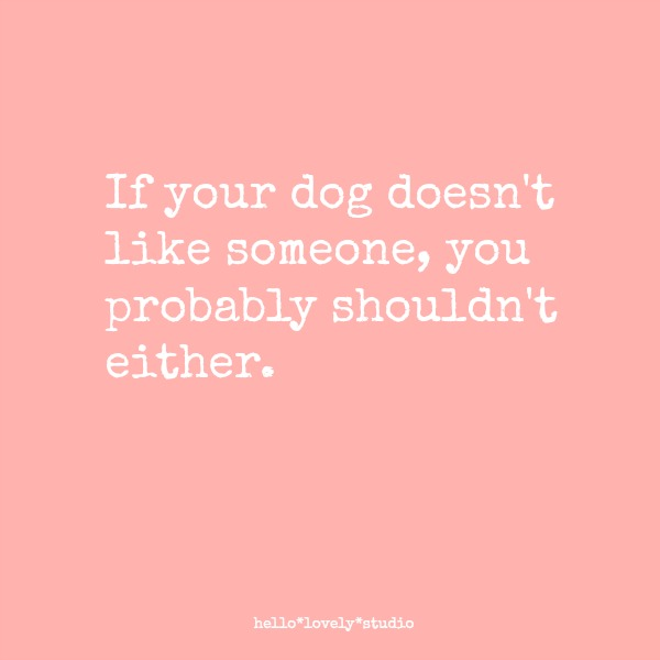 Funny dog quote: If your dog doesn't like someone, you probably shouldn't either. #funnyquote #dogs #humor