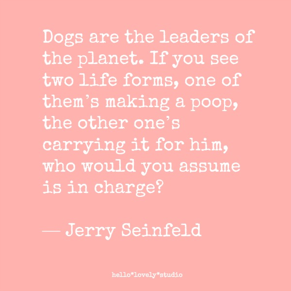 Funniest dog quotes! Dogs are the leaders of the planet. If you see two life forms, one of them's making a poop, the other one's carrying it for him, who would you assume is in charge? Jerry Seinfeld quote. #dogs #quote #funny