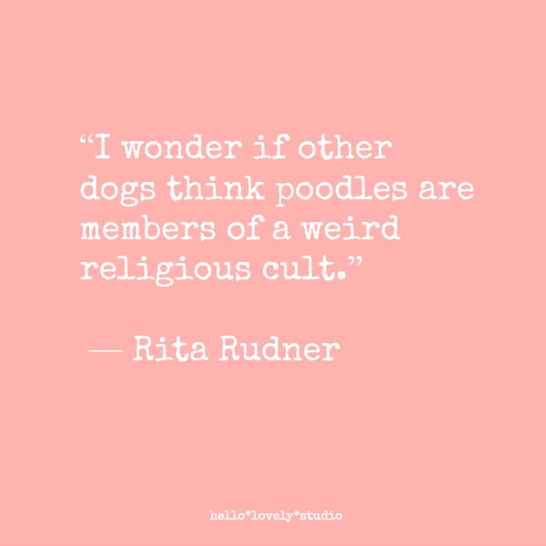 Funny dog quote from comedian Rita Rudner. I wonder if other dogs think poodles are members of a weird religious cult. #funny #dogs #humor #quote