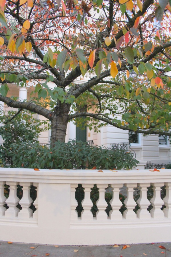 Fall tree in London garden. Notting Hill beauty, classic architecture, and inspiration from a London stroll by Hello Lovely Studio. Personal Reflections: What Does Greater Kindness to Yourself Look Like?