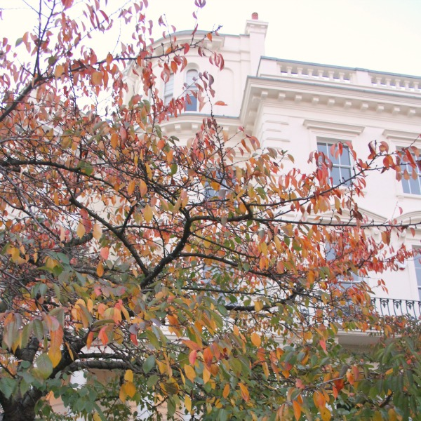 Fall leaves in London. Notting Hill beauty, classic architecture, and inspiration from a London stroll by Hello Lovely Studio. Personal Reflections: What Does Greater Kindness to Yourself Look Like?