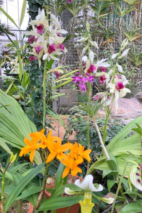 Tropical flowers and orchids in Nicholas Conservatory and Gardens in winter. Photo by Hello Lovely Studio.