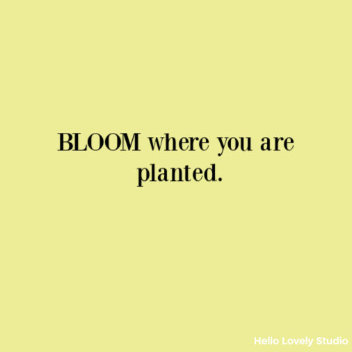 Bloom Where you are planted inspirational quote on Hello Lovely Studio. #quotes #bloom #inspirationalquote
