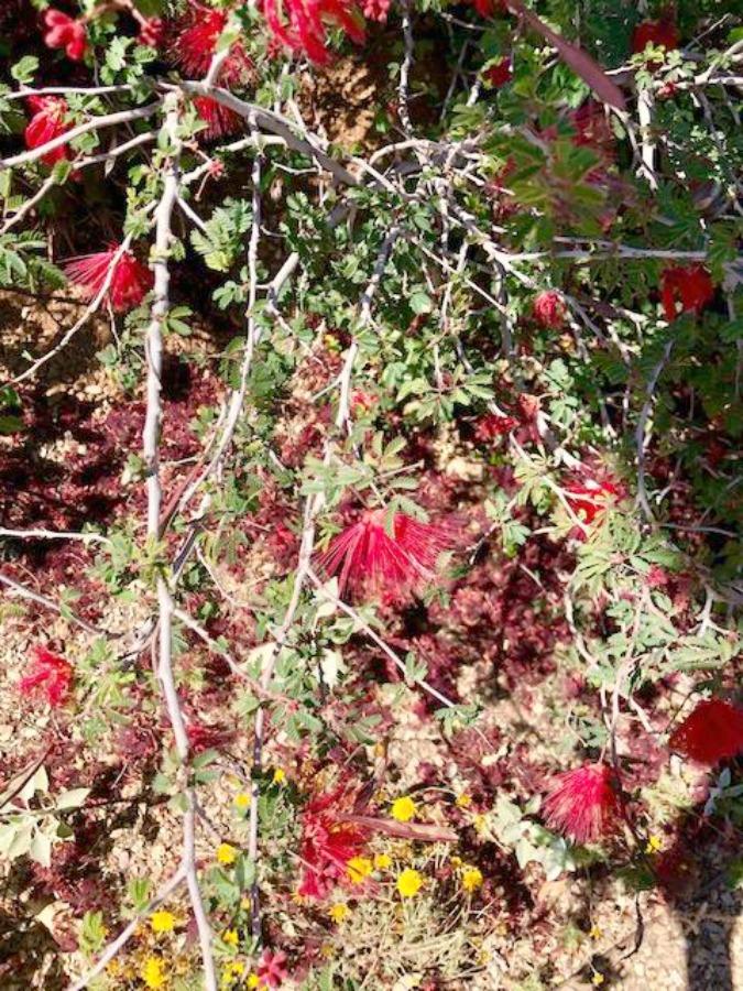Desert landscape in bloom with red in Arizona - Hello Lovely Studio.
