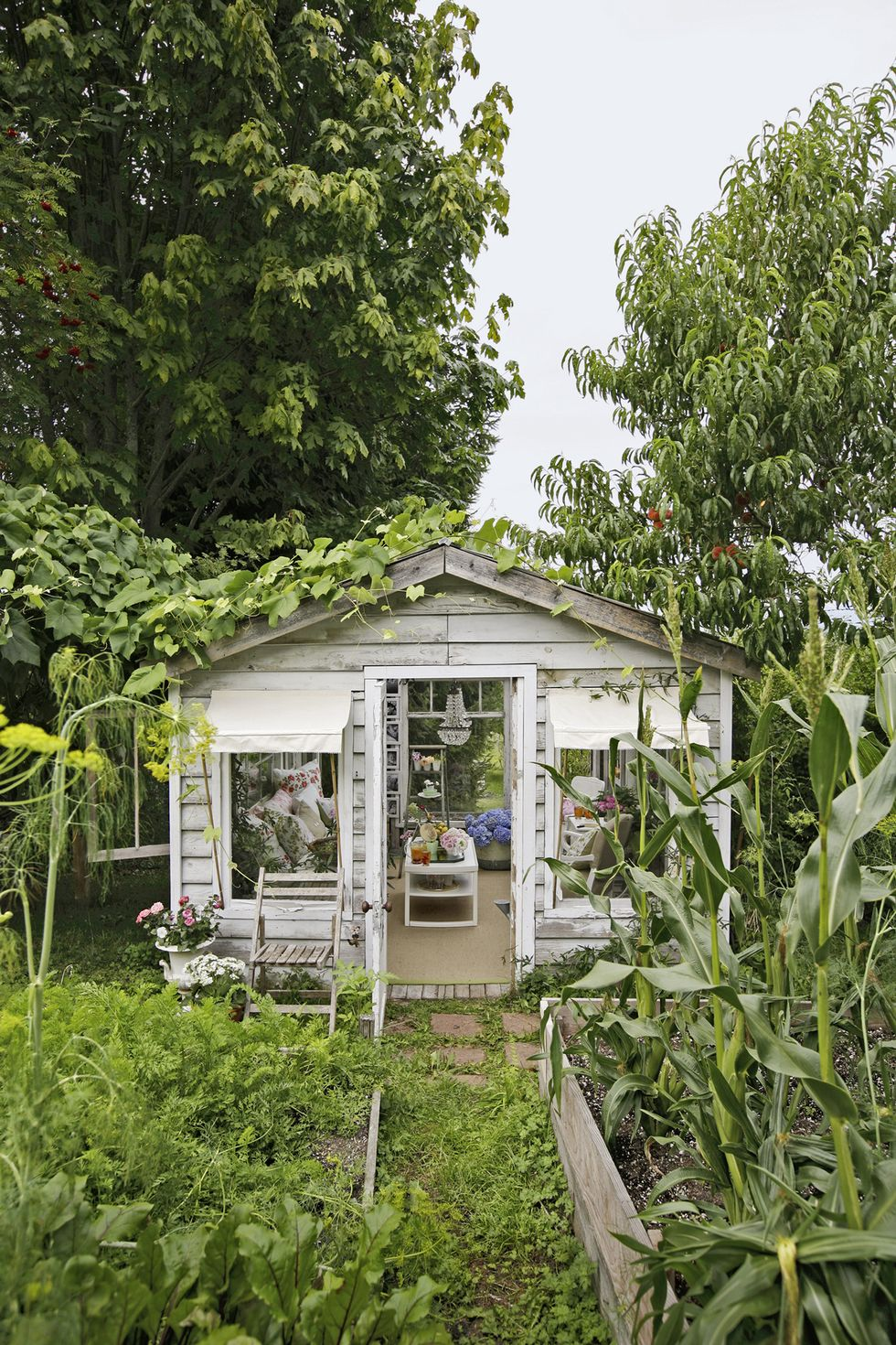 Charming vintage she shed greenhouse exterior has a glass roof, original wood, and a breathtaking shabby chic interior! #sheshed #sheds #greenhouse #outdooroasis #gardenshed #pottingshed