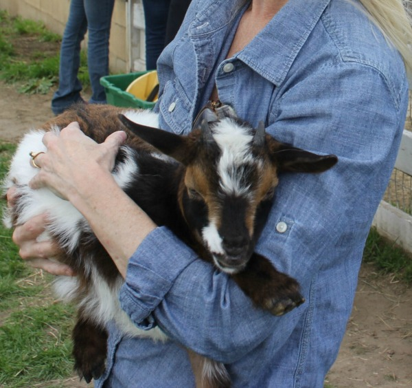 Snuggling a baby goat with tones of coffee, cream, and caramel at Gretta's Goats - Hello Lovely Studio.