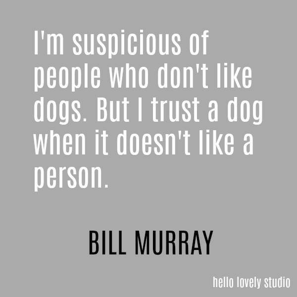 Humorous quote by Bill Murray on a grey ground on Hello Lovely Studio.