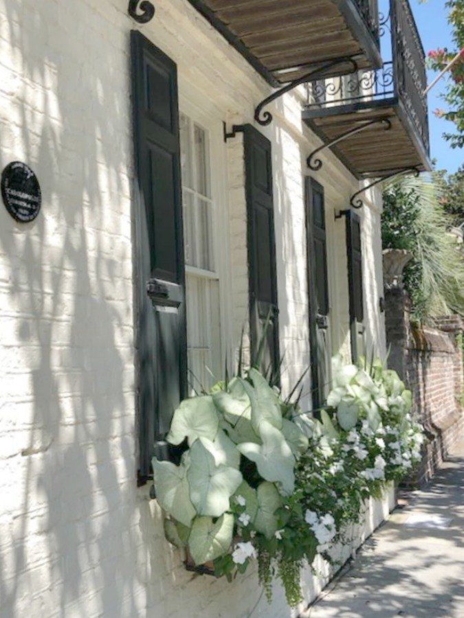 Charleston's charming historic district is graced with architecturally magnificent homes, secret gardens, lush window boxes, and colorful design inspiration. Hello Lovely Studio.