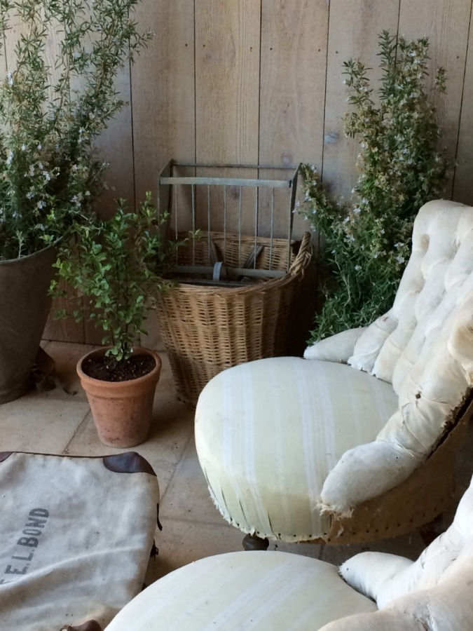 Rustic French basket on Patina Farm porch with a vintage chair and potted vines. Brooke Giannetti.