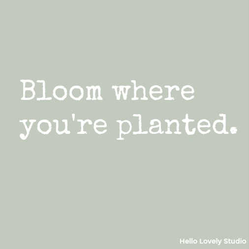 Bloom where you're planted - inspirational quote on Hello Lovely Studio.