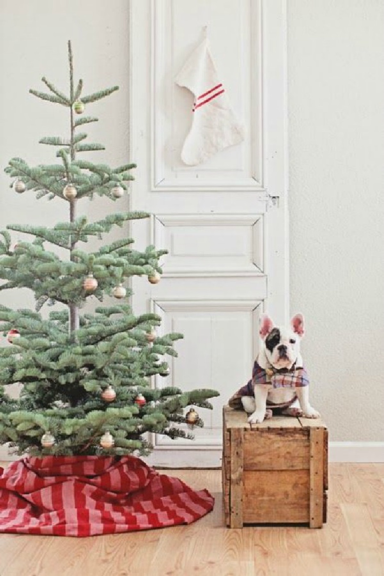French farmhouse Christmas tree with red and pink skirt, vintage door, and bulldog in cape! Dreamywhites.