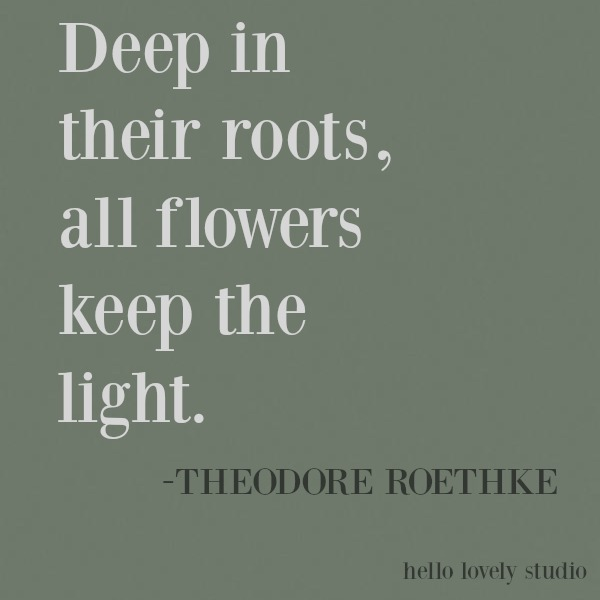 Inspiring quote of encouragement on Hello Lovely Studio about flowers from Theodore Roethke. #inspirational #quote #kindness #encouragement #Roethke