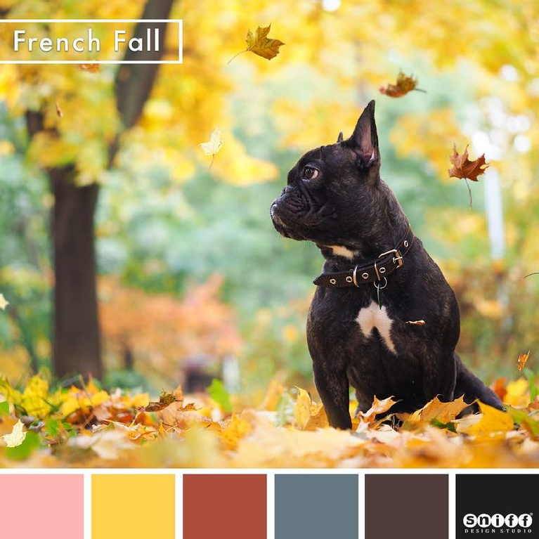 Vivid fall colors of a French bulldog with golden and russett fallen leaves in France - Sniff Design. #frenchfall #frenchcountry #autumninspiration #frenchbulldogs