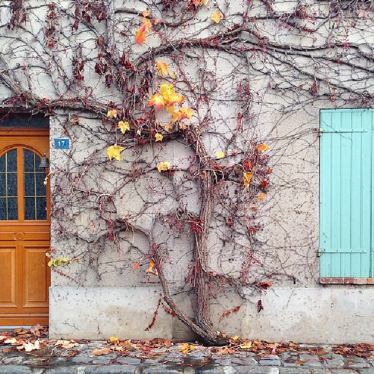 Gorgeous fall in France image with climbing vines on a weathered facade with blue shutter. Mia Katva #frenchcountry #facade #houseexterior #frenchfall #autumninfrance #rusticfrench #frenchfarmhouse