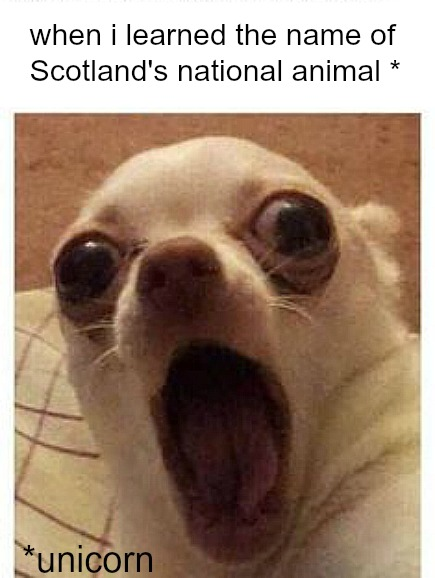 Funny dog meme humor about Scotland.  COME OVER TO LAUGH at Silly Humor Quotes, Smiles & Serious Laugh Therapy! #memes #dogmeme #humor #funnymeme