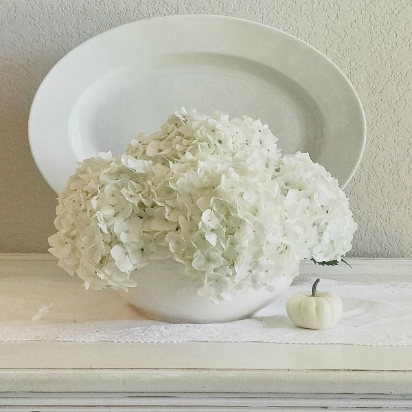 When white hydrangeas and an ironstone oval platter are joined by a darling baby boo - the softer side of fall sighs with serene relief - Maven Haven. #toneontone #interiordesign #ironstone #stillife #hydrangea