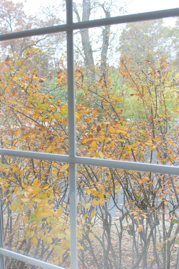 Fallen leaves, autumn trees, and turning colors in my Northern Illinois yard - Hello Lovely Studio.