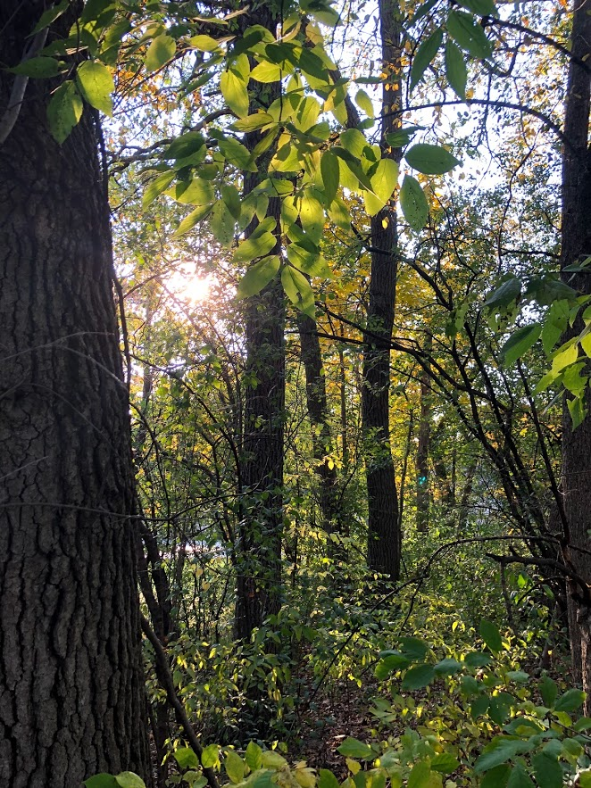 Fall trees in Northern Illinois - Hello Lovely Studio.