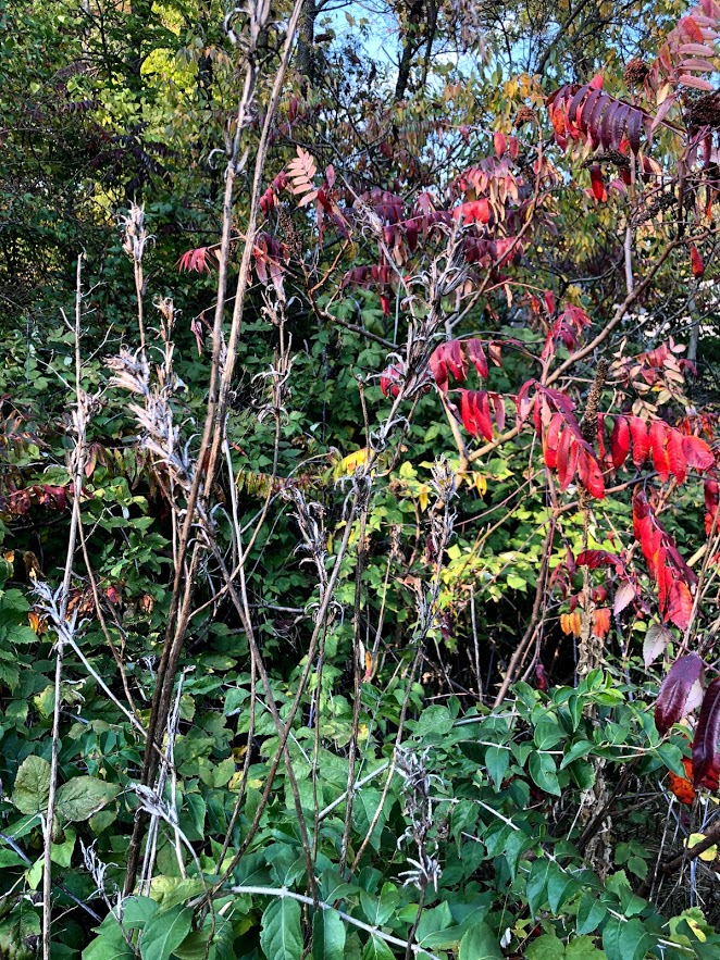 Changing colors in a Northern Illinois garden - Hello Lovely Studio.