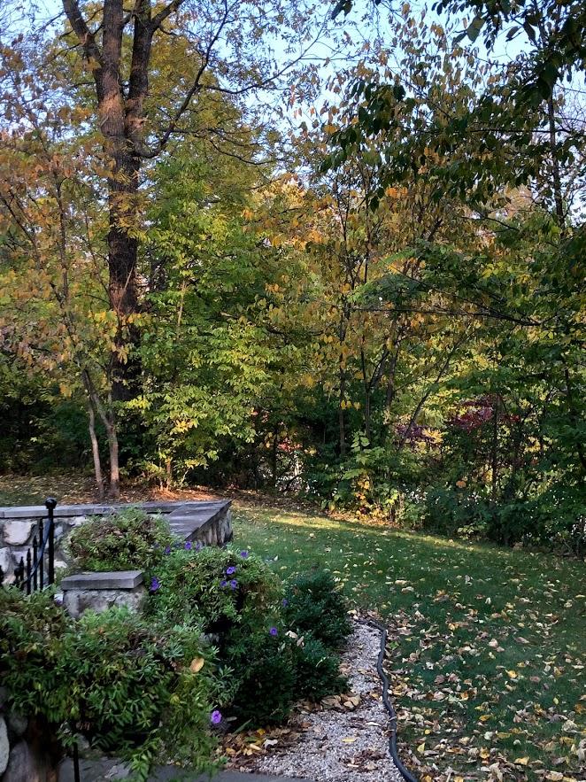 Turning leaves in autumn in Northern Illinois - Hello Lovely Studio.