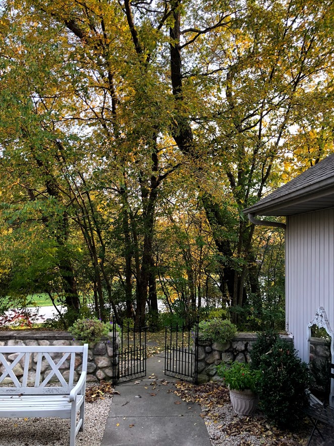 Changing leaves on trees in autumn in Northern Illinois - Hello Lovely Studio.