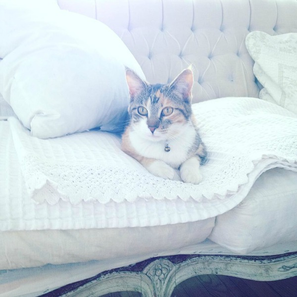 Cat on a vintage tufted sofa in a white Swedish cottage by My Petite Maison.