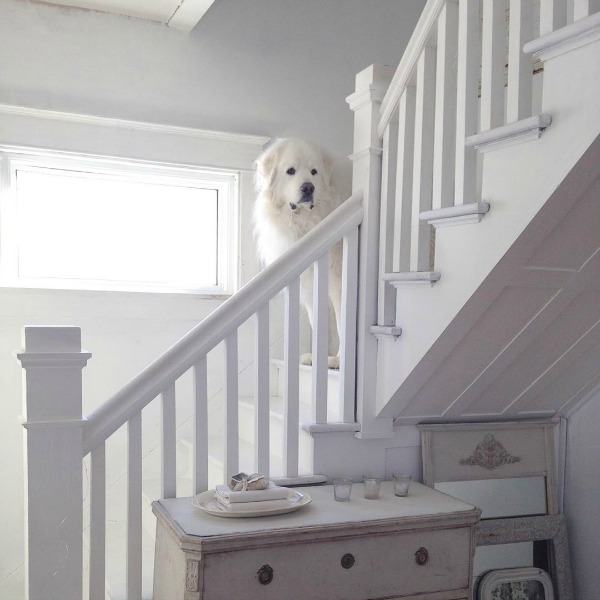 Great Pyrenees on white painted staircase in Nordic French cottage by My Petite Maison.
