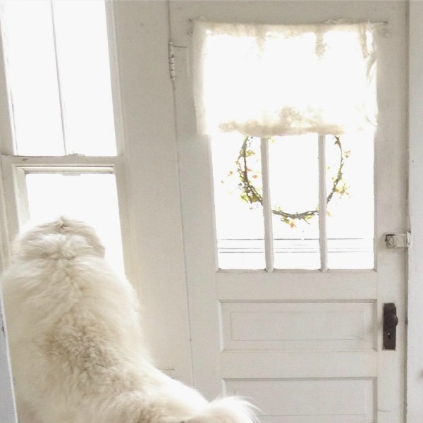 Great Pyrenees gazing out window of beautiful vintage white Nordic French cottage by My Petite Maison.
