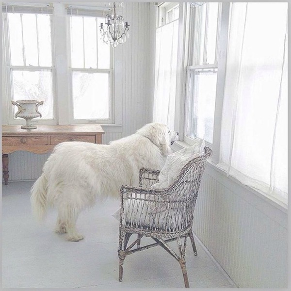 Great Pyrenees gazing out a porch window in a white Nordic French cottage by My Petite Maison.